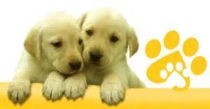 Dog Partners