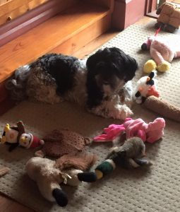 Maisie and Toys