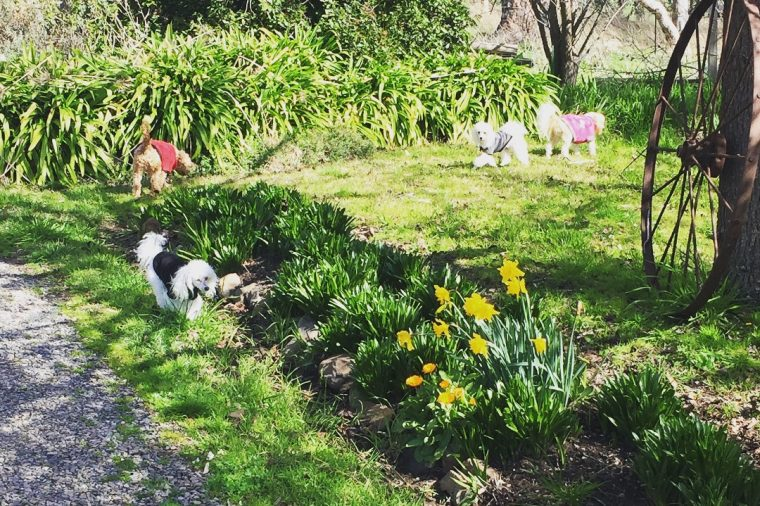 Hope Springs Eternal Dog Rescue, Rehoming & Retirement Inc