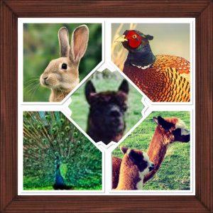 Mack Livestock Collage